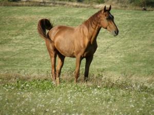 Kone na Iliji