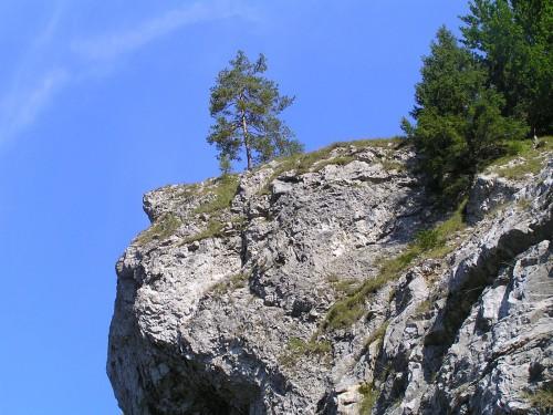 Osamelý strom na skale nad cestou