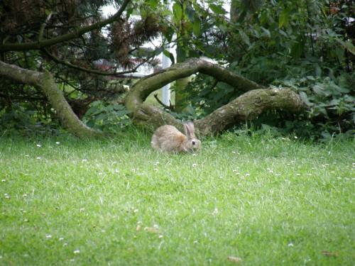 Zajac-3