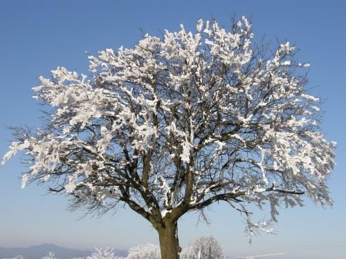 Zasnežený strom