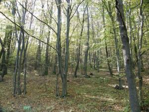 Lesy nad Čelovcami